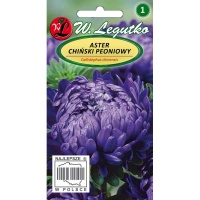 ASTER PEONIOWY / FIOLETOWY / 1G /