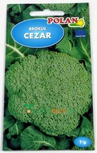 BROKUŁ CEZAR / 1G